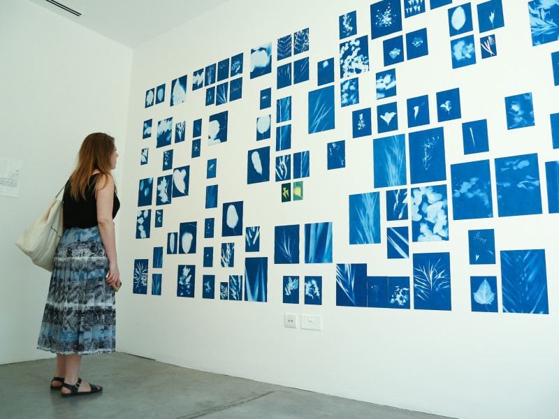 Making Cyanotype Prints