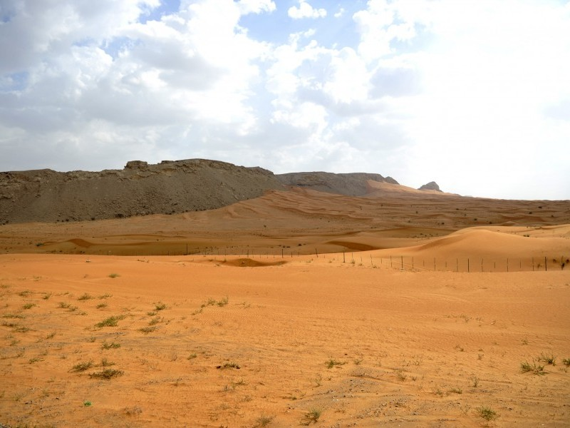 Identifying and Harvesting Wild Edible Plants of the UAE Desert